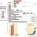 Somatic, causal mutations occur in a high proportion of p53 pathway genes.tif