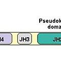 JAK domain.tif
