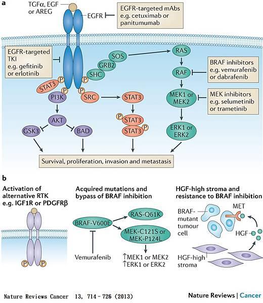 EGFR Drug.jpg