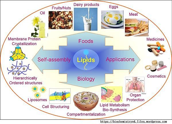 lipids03.jpg
