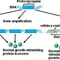 Oncogene演變史.jpg
