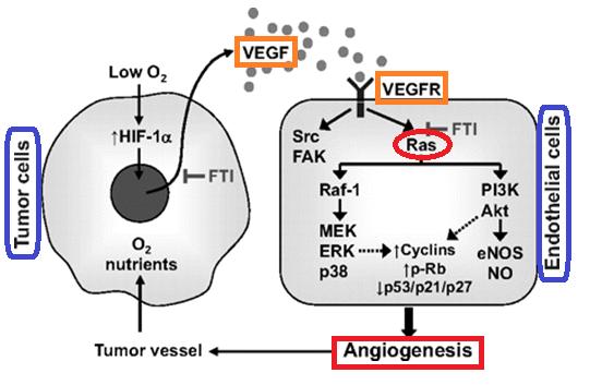 RAS vs angiogenesis.png