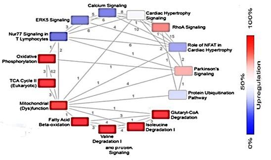 第二階段-相關基因變化圖.jpg