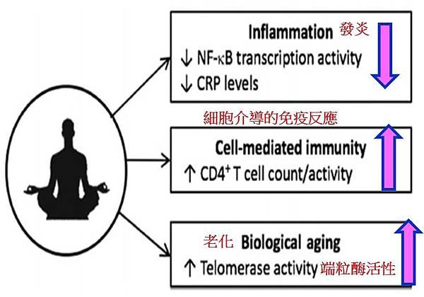 正念冥想和免疫系統生物標誌物.jpg