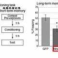記憶建構-4.bmp