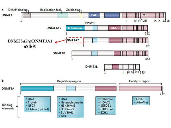 DNMT3A-structure.tif