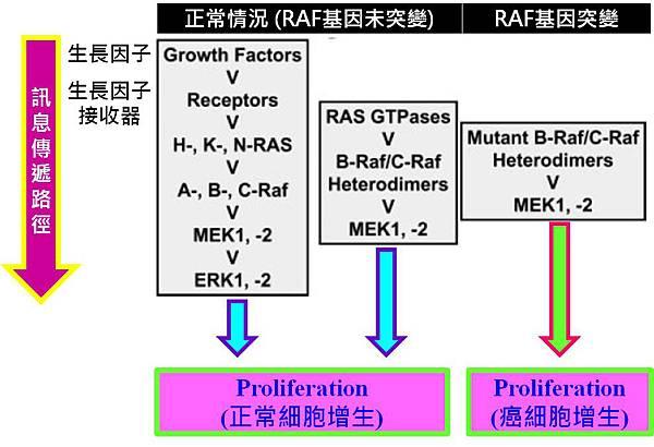RAF訊息傳遞路徑.jpg