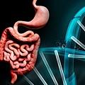 大腸vs基因.tif
