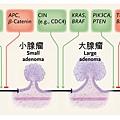 大腸進程vs基因.tif
