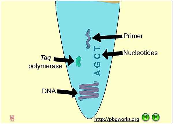 eLib_PCR.png