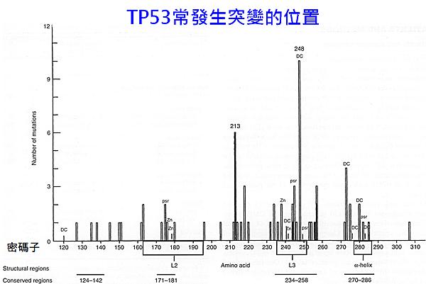 乳癌-TP53突變位置.png