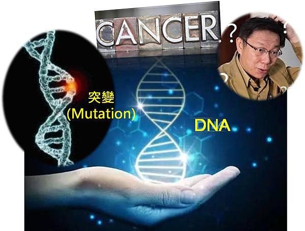 人類癌症中BRAF基因的突變.png