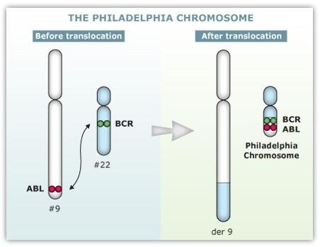 費城染色體.tif
