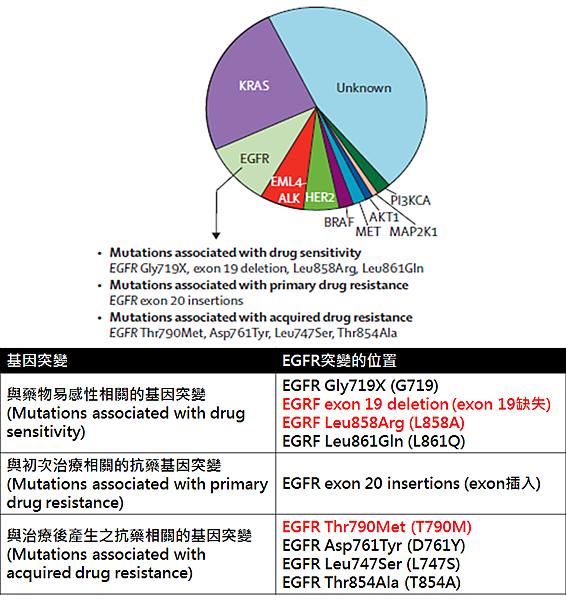 肺癌-3.png