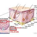 Melanoma-1-2.tif