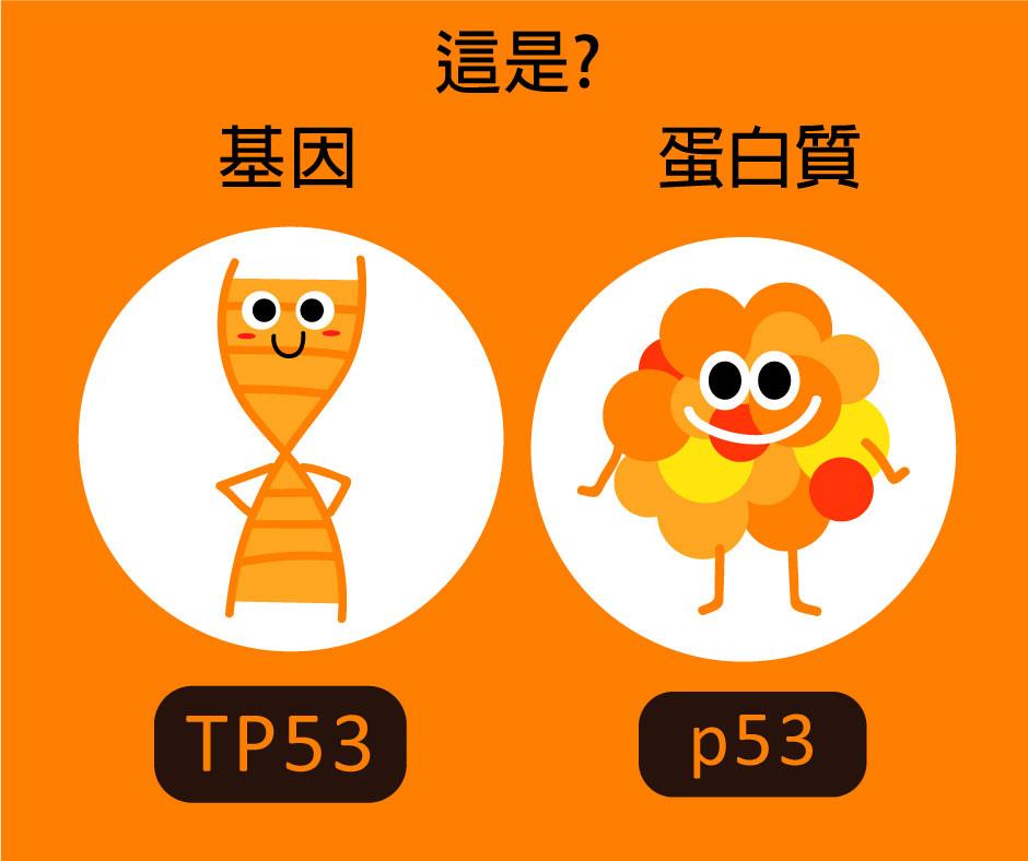 15-TP53和P53的不同.jpg