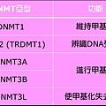 DNMT功能.tif