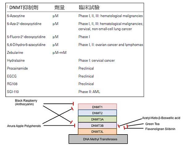 DNMT inhibitor.tif