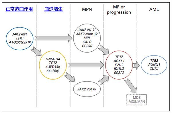 MPN gene mutation progression.tif