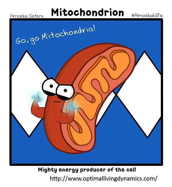 Mitochondria-0.tif