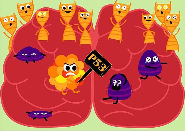 36p53突變在惡性腦瘤的重要性.jpg