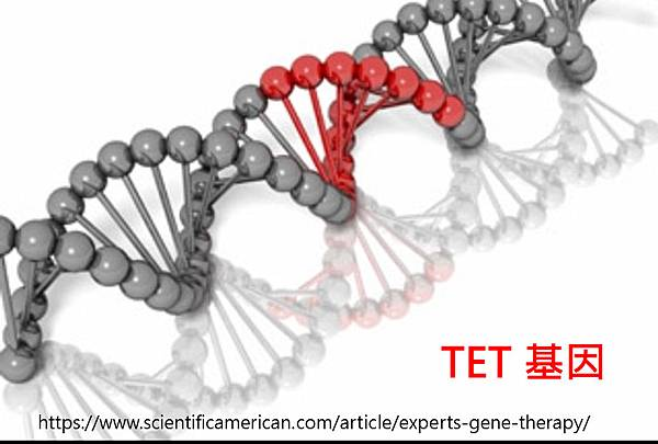 TET gene structure.tif