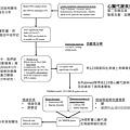 精神疾病-文獻探討流程圖.tif