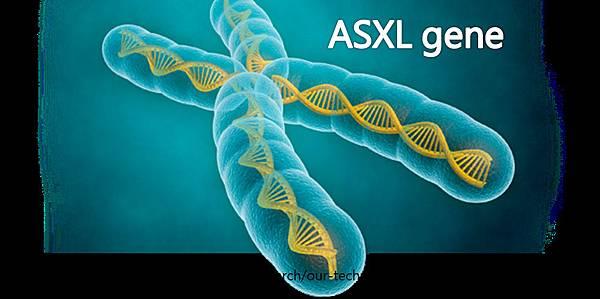 ASXL基因-封面.tif