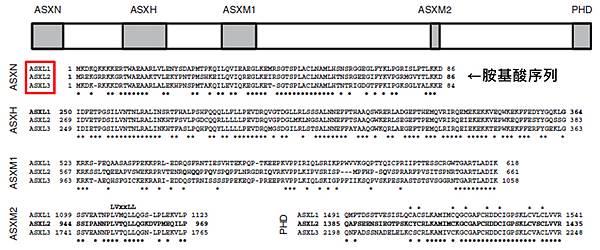 ASXL基因- 序列.tif