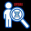SF3B1-封面.tif