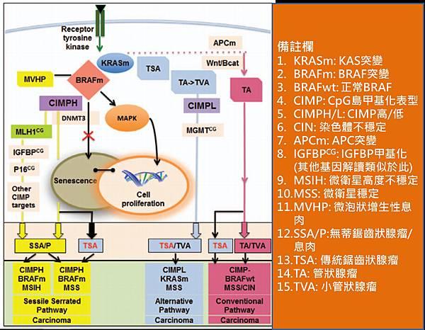 CRC-molecular pathwau.tif