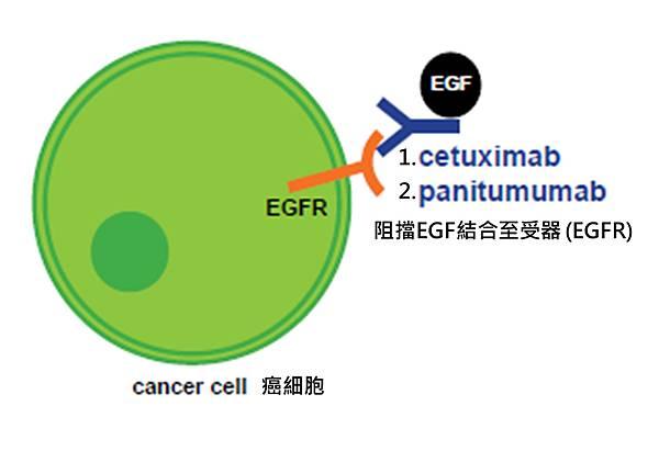 Colon-NCCN-EGFR targeted pathway.tif