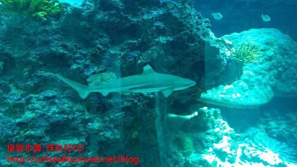 image001_YoYoTempo_國立海洋生物博物館.jpg