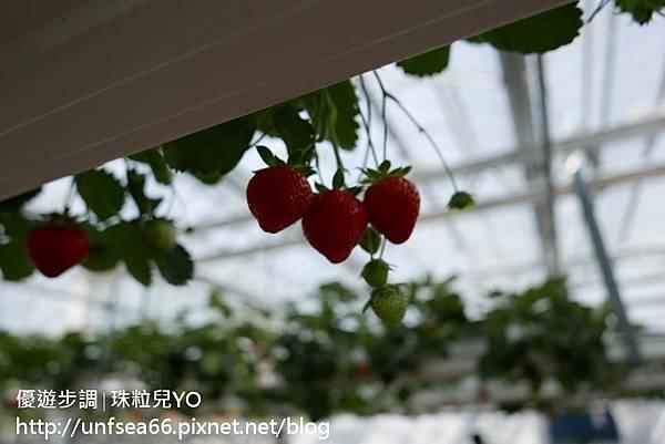 image221_YoYoTempo_桃園農業博覽會.jpg