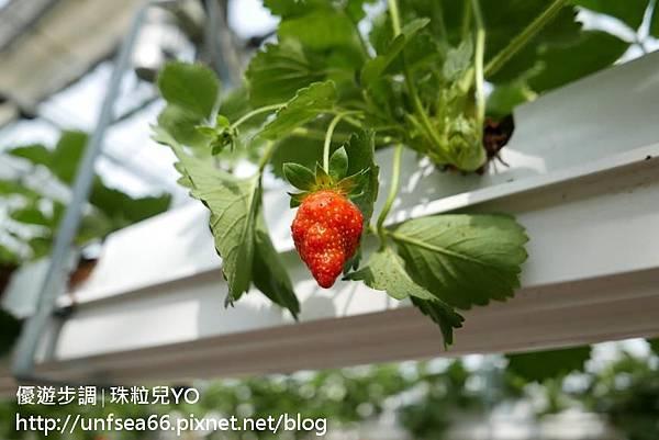 image223_YoYoTempo_桃園農業博覽會.jpg