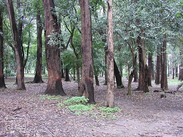 image001_YoYoTempo優遊步調_【巴西旅遊景點】伊比拉布埃拉公園|Parque Ibirapuera.jpg
