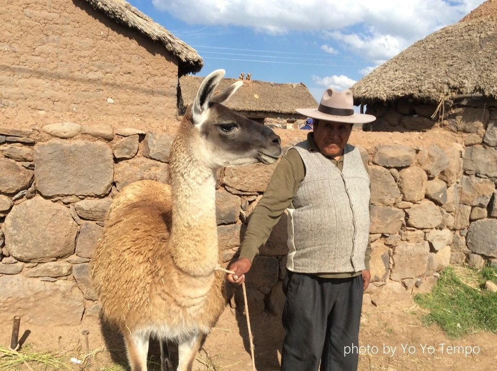 South America four species of cute camelid_YoYoTempo_image007.jpg