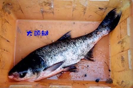 魚寶寶寫真館-030.jpg