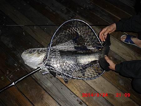 魚寶寶寫真館-056
