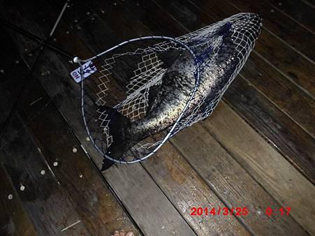 魚寶寶寫真館-058