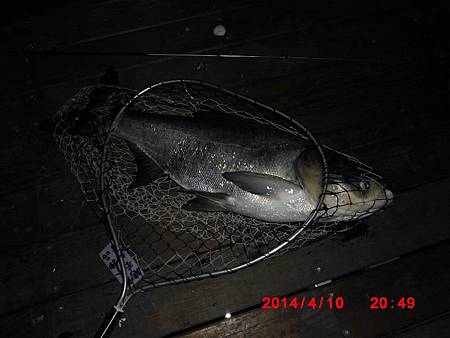 魚寶寶寫真館-060