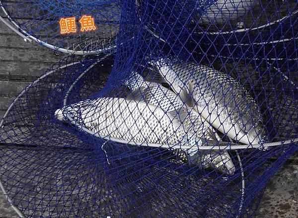 1041222-CIMG6950a鯁魚.jpg
