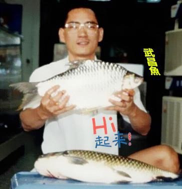 魚寶寶寫真館-武昌魚