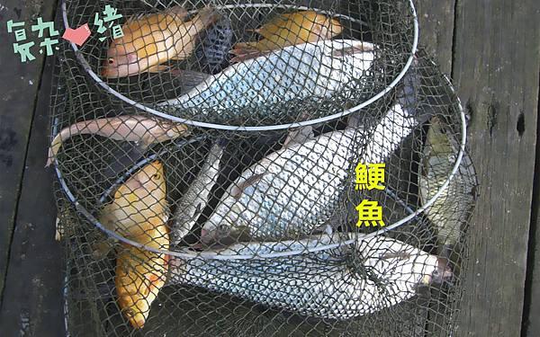 魚寶寶寫真館-鯁魚02