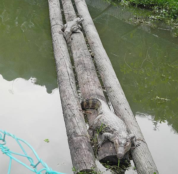 埔里鯉魚潭DSCN1201.jpg