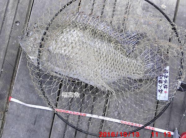1051013-CIMG7427福壽魚