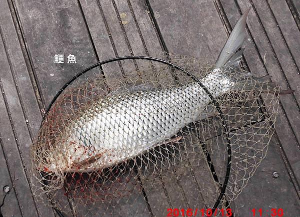 1051013-CIMG7436鯁魚