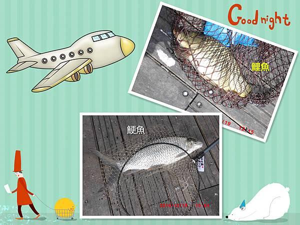 1051020-CIMG7443鯁鯉魚合併.jpg