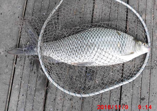 1051109-CIMG7491鯁魚.jpg