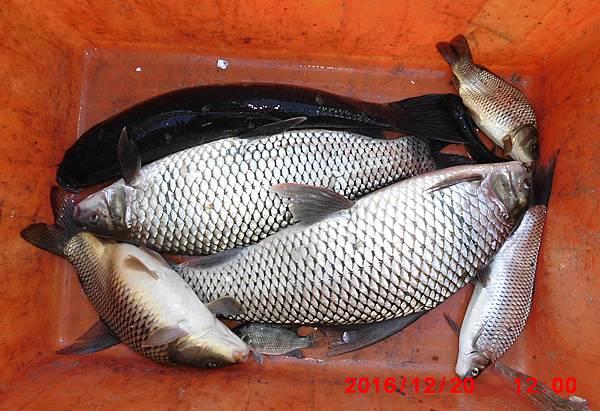 1051220-CIMG7557漁獲.jpg